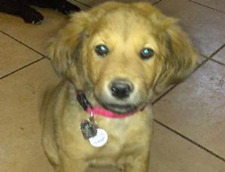 Canela the Mixed Breed