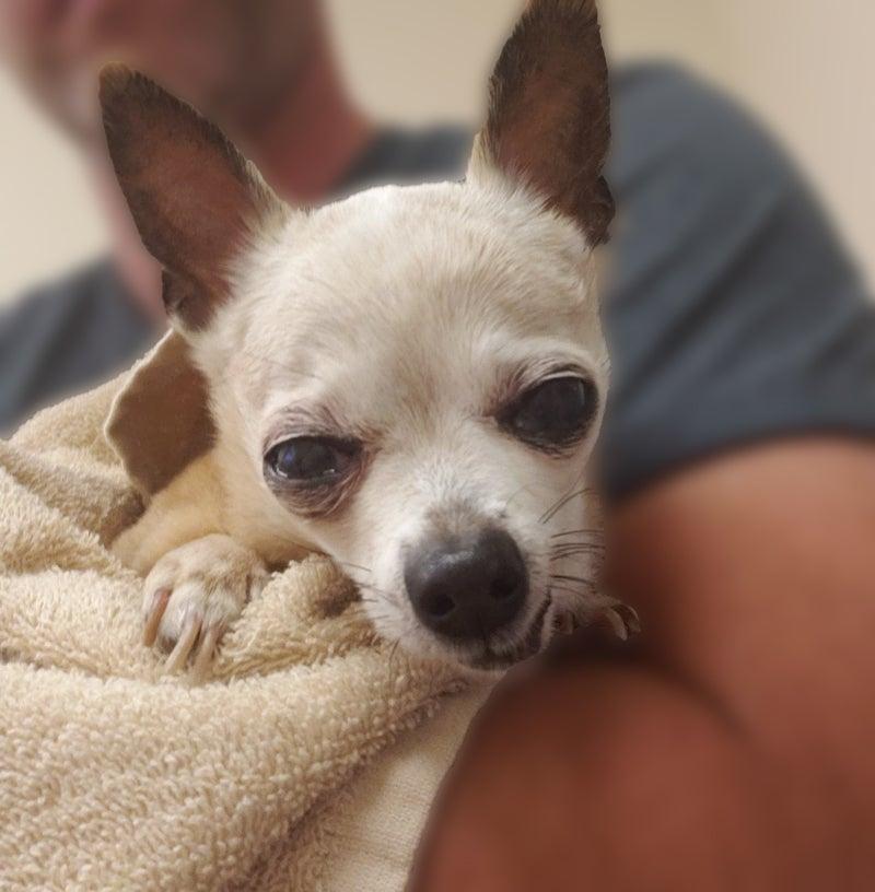 Pet Reunion Stories | AKC Reunite