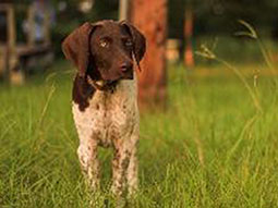 Dakota-pointer