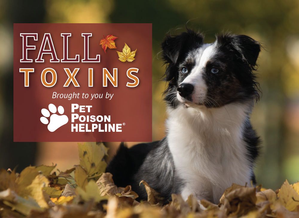 Fall Pet Poisons