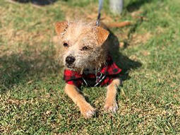 Freddie the Terrier Mix