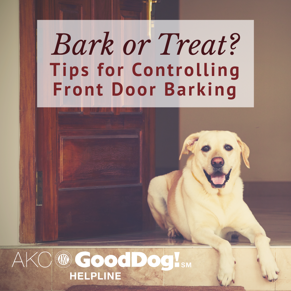 Doorbell Training Tips Akc Reunite