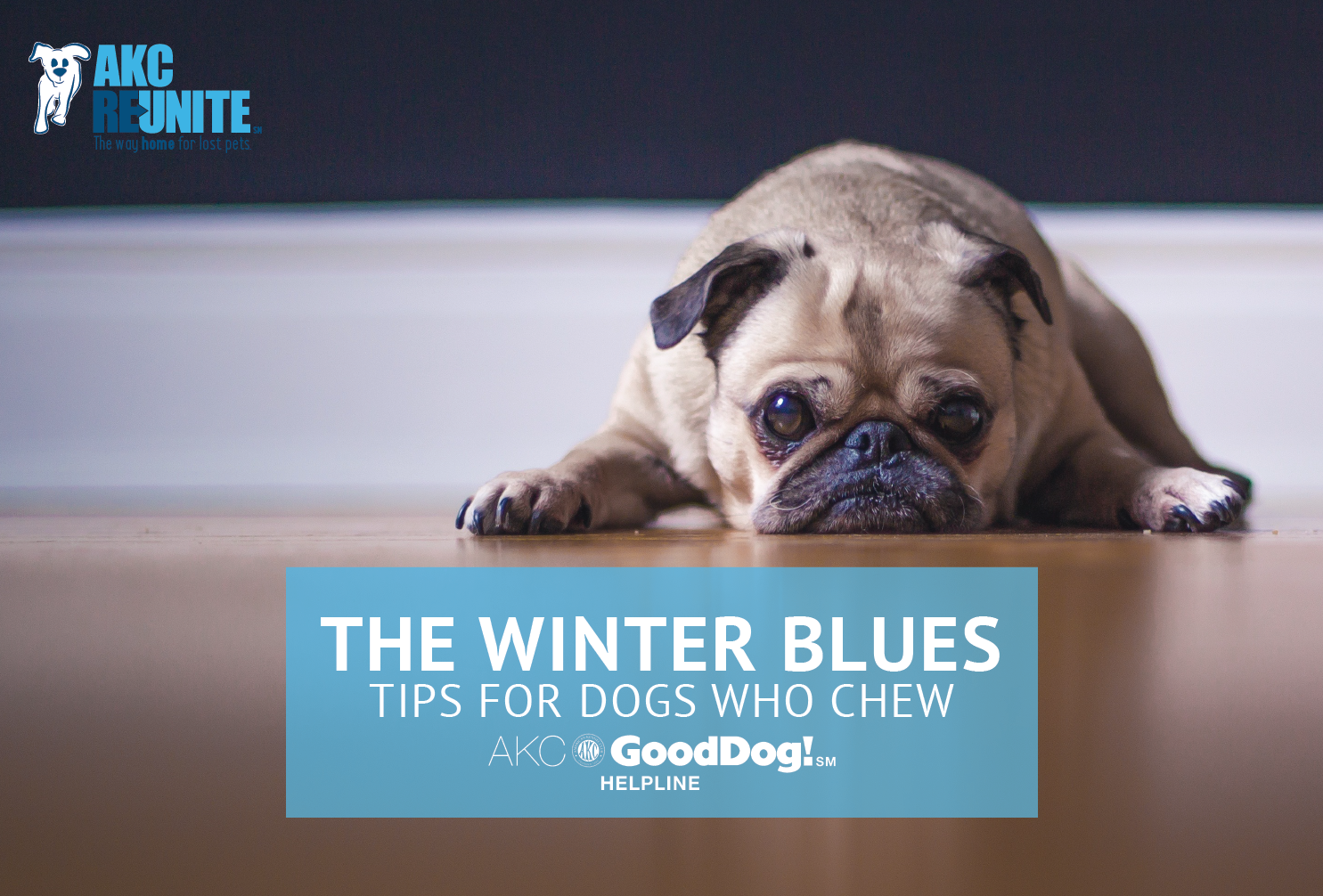 Tips for Dogs Who Chew