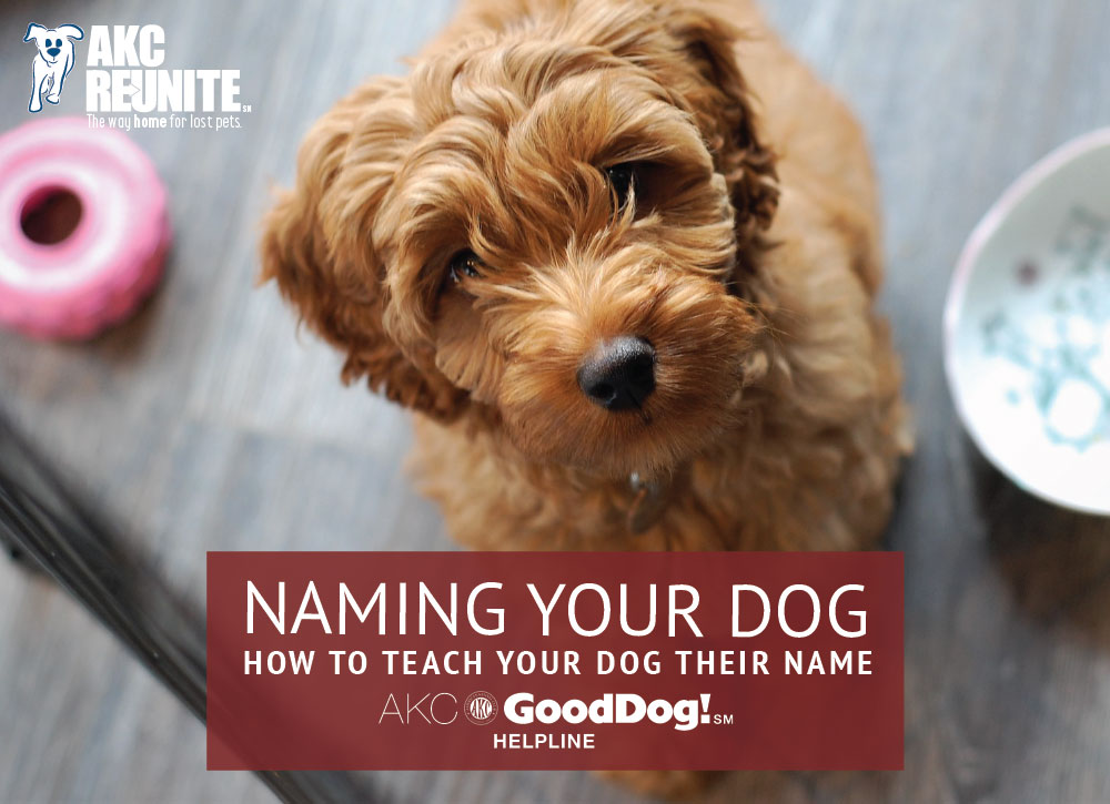 Teach your dog their name